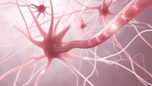 Nervenzellen, Entzündung